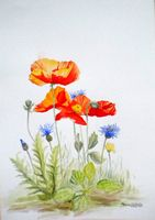 030-Poppies-Cornflowers